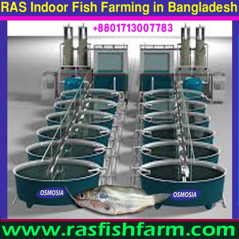 RAS / Recirculating Aquaculture Systems Indoor Fish Farming Project